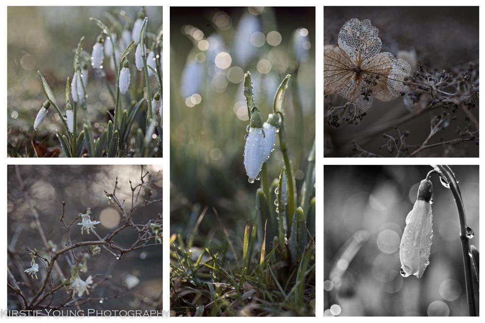 February Blog-