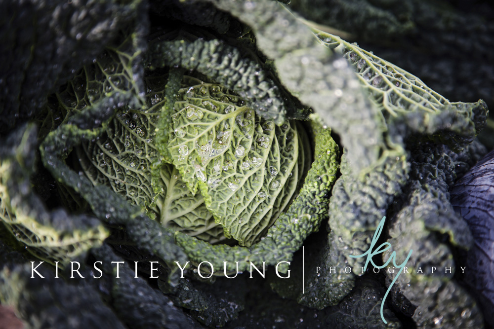Green_Cabbage-2