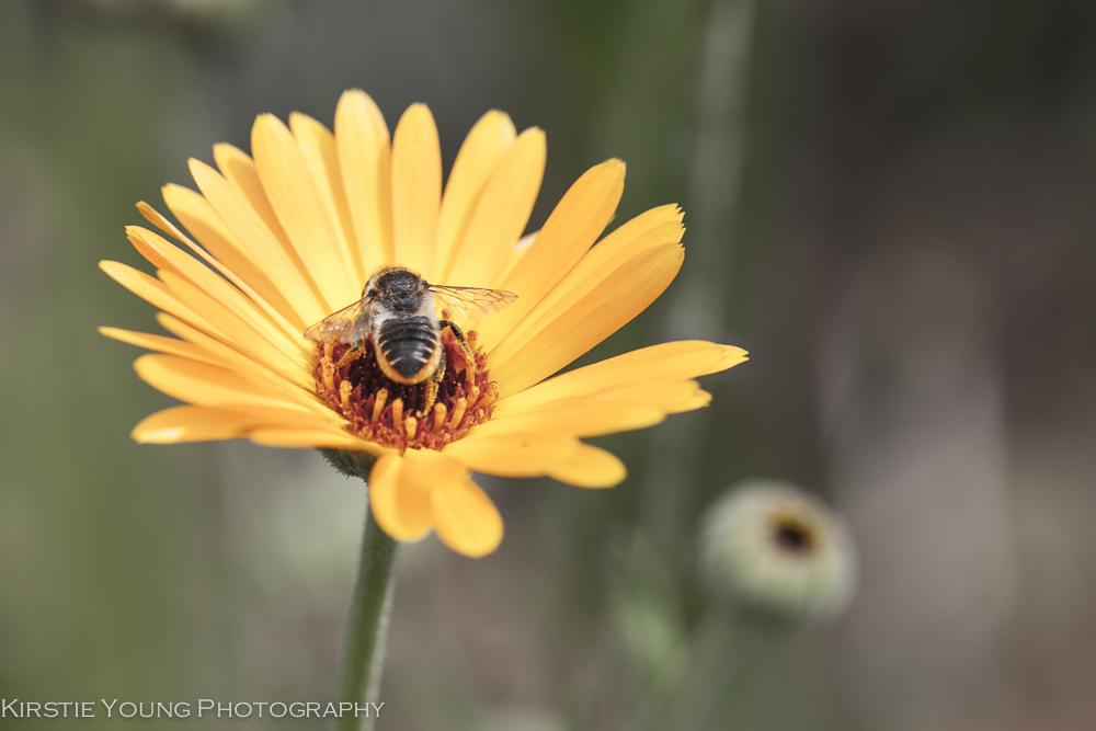 HoneyBee-4052