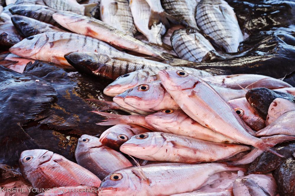 Marseille Fish Market_7166