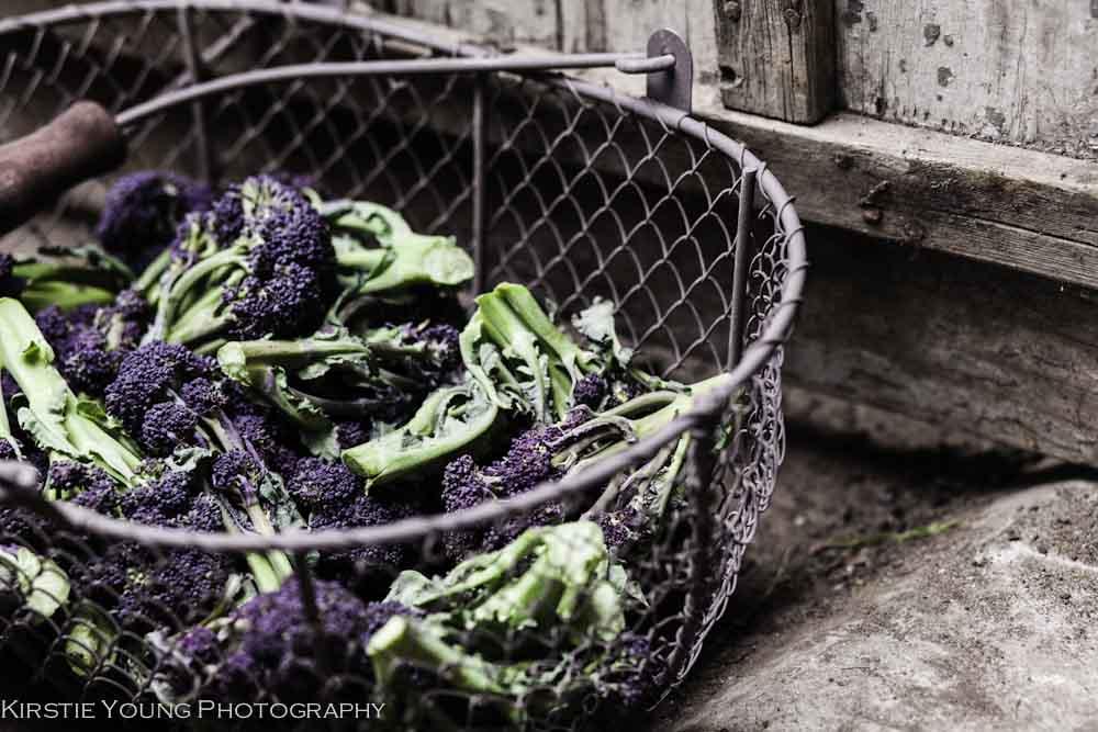 purplesproutingbroccoli-8018